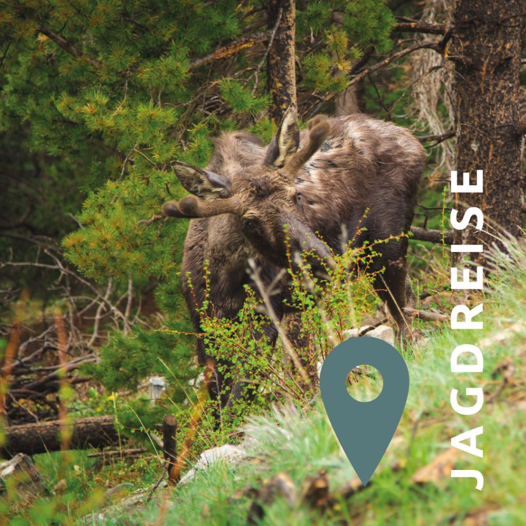 Jagdreisen Alaska